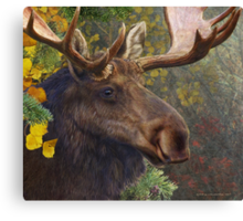 bull moose portrait amid aspen and spruce Canvas Print