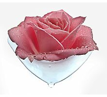 Rose Tear Photographic Print