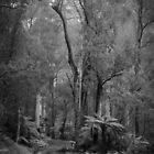Kurth Kiln Regional Park by Christine  Wilson Photography