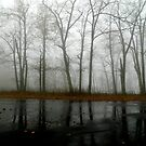 Blue Ridge (in the Fog) - IV   ^ by ctheworld