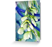 Maple seeds Greeting Card