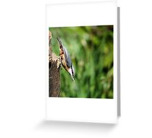 Nuthatch with seed Greeting Card