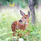 Once upon a Fawn - White Tailed Deer Fawn by Jim Cumming