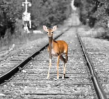 Deer & The Tracks by Jeff Ore