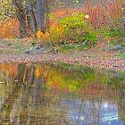 Autumn Reflections by KathleenRinker