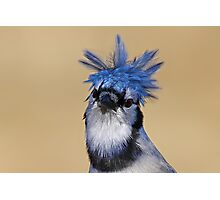 Is that you Don King? - Blue Jay Photographic Print