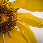 Sunday Sun by Sue Morgan