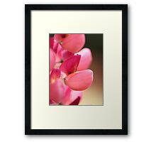 Lupine named Gallery Red Framed Print