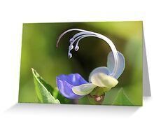 Clerodendrum Ugandense or Blue Butterfly Bush Greeting Card