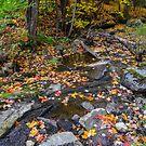 Autumn Stream  by Nancy Barrett