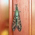 Antlion On My Door by AuntDot