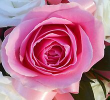 Pink Rose and Ribbon by BlueMoonRose