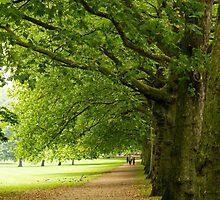 Green Park by MichaelJP