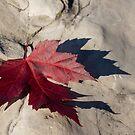 Oh Canada Maple Leaf by Georgia Mizuleva