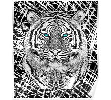 Tiger Portrait Black and White in Graphic Etching Style Poster