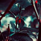 Dark Red by ghastly