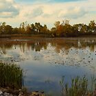 Autumn at East Harbor State Park 2 by SRowe Art