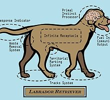 Originaldogco CHOCOLATE LABRADOR RETRIEVER ANATOMY  by Lisa Rotenberg