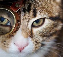 Steampunk Funny Cute Cat Sticker