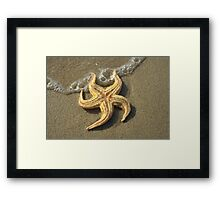 Starfish and bubbles Framed Print