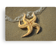 Starfish and bubbles Canvas Print