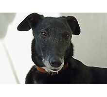 Old Nobby- Rescue Dog Photographic Print