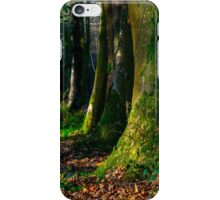 Longleat Forest - Trees at Autumn iPhone Case/Skin