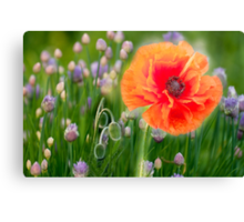 First Poppy Canvas Print