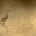Yellow Mist - Great Blue Heron, Algonquin Park by Jim Cumming