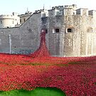 Ceramic Poppies at Tower  of London by Braedene