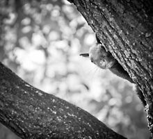 Peek around the branch by melissasteep