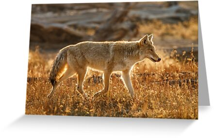 ON THE HUNT by Sandy Stewart
