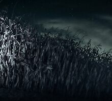 Spooky cornfield at night by melissasteep