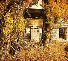 Boarding House Ruins with Poplars by John Williams