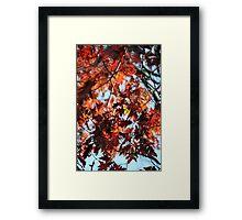 Okay, its Oak Framed Print