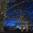 A Longwood Holiday by cclaude