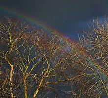Somewhere Over the Rainbow by AnnDixon