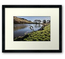 The Swan Lake Framed Print