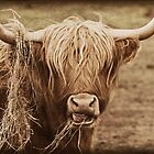 Highland Cow by Furtographic