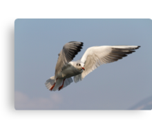 seagull fly on lake Canvas Print