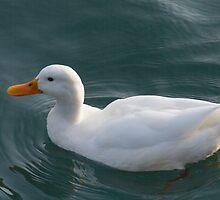ducks on lake by spetenfia