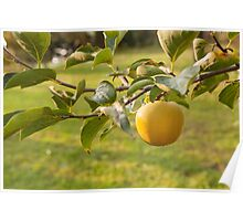 apple on tree Poster