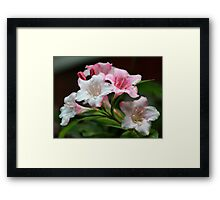 White pink flowers. Framed Print