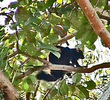 BLACK ORANGE EYED LEMUR IN TREE ON NOSY KOMBA  by JAYMILO