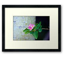 Honey Suckle Blossoms - Digital Oil  Framed Print