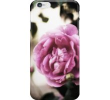 Rose of Provence iPhone Case/Skin