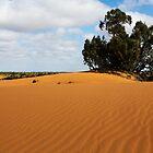 Dunes - Perry Sandhills by Colin  Ewington