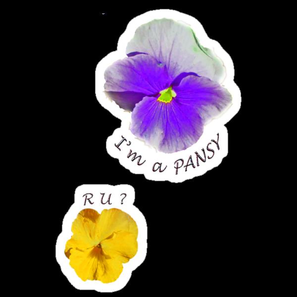 I'm a Pansy... R U ? by DAdeSimone