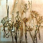 "Mornington Peninsuala Grasslands 4 by Belinda ""BillyLee"" NYE (Printmaker)"