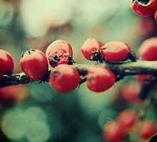 Red Winter Berries by Sybille Sterk